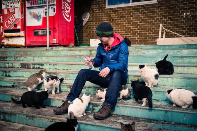 Pulau Tashirojima, tempat surgawi kucing di Jepang