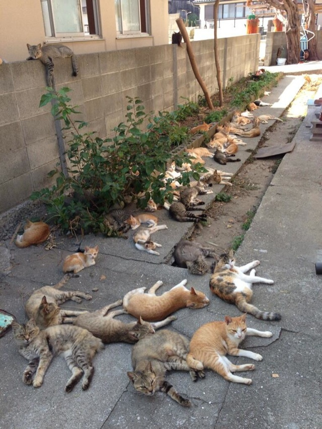 cat-island-japan-woe10