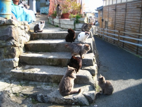 cat-island-japan-woe11