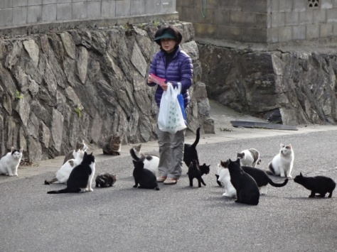 cat-island-japan-woe12