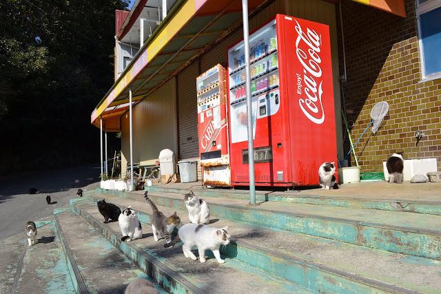 cat-island-japan-woe13