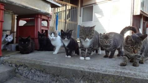 cat-island-japan-woe14