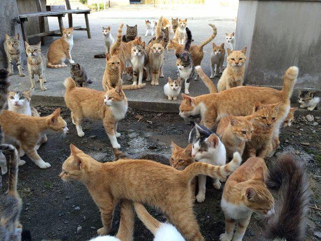 cat-island-japan-woe2