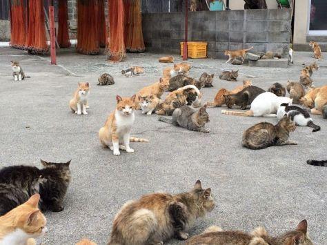 cat-island-japan-woe3