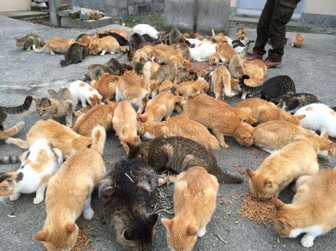 cat-island-japan-woe4