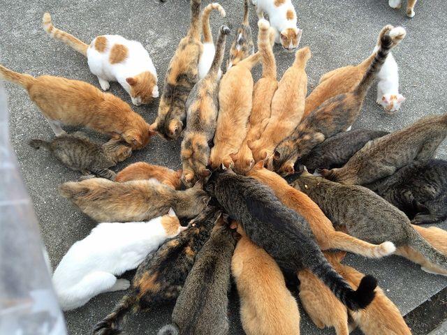 cat-island-japan-woe5