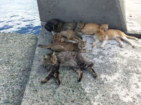 cat-island-japan-woe6