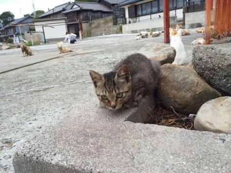 cat-island-japan-woe7