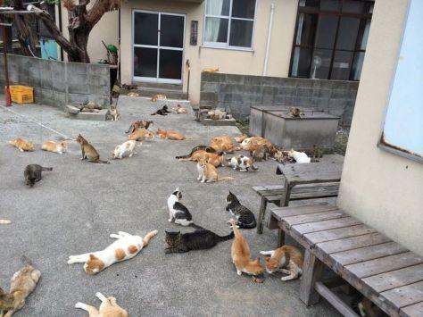cat-island-japan-woe8