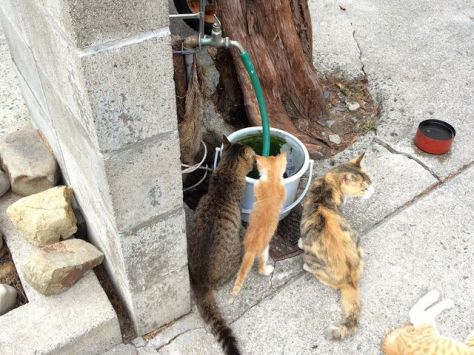 cat-island-japan-woe9